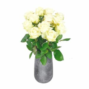 12 Roses blanches + vase