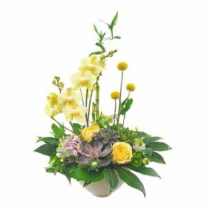 Coupe d'orchidées Luxe