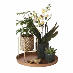 Luxe - Plateau Design
