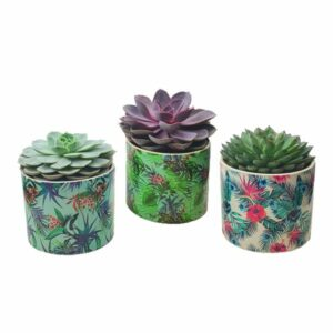 Trio plantes grasses